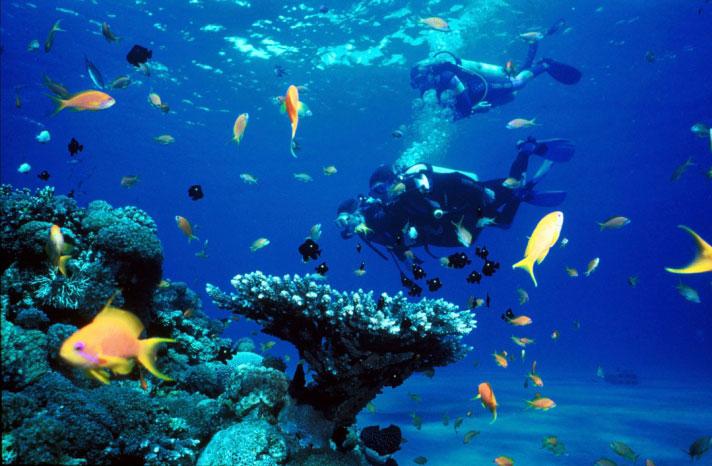 Corsi e attività diving