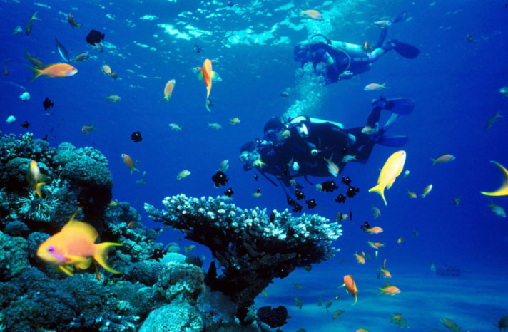 Diving lessons and trips